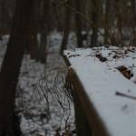 winter_17.jpg